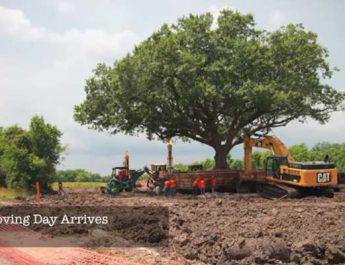 Pemindahan Pohon