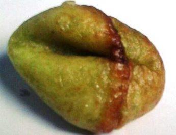 tholpit alias adrem, makanan tradisional khas Bantul